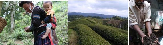 Fairtrade teas with the savoury taste of Nature
