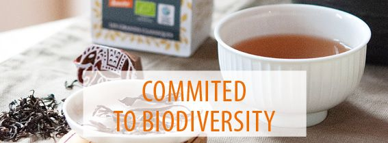 Reflecting an approach that combines organoleptic quality and sustainable development: discover our teas, herbal teas and spices for biodiversity.