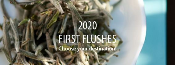 2020 First Flushes: choose your destination!